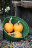 Lots of pumpkins Royalty Free Stock Photos