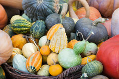 Lots of pumpkins and squash Stock Photography