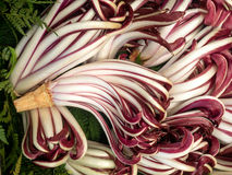 Lots of radicchio heads Stock Photos