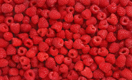 Lots of Raspberries Royalty Free Stock Images