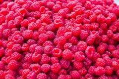 Lots of Raspberries Royalty Free Stock Image