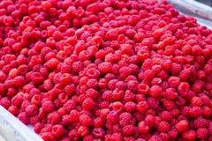 Lots of Raspberries Stock Image