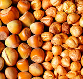 Lots of raw, pealed and unpealed hazelnuts on a table Stock Photography
