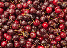 Lots of red cherries. Stock Photos