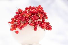Red currant bowl, focus on foreground royalty free stock images