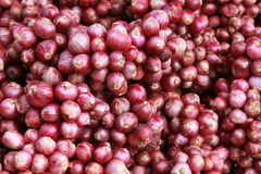 Lots Of Red Onion Bundles Stock Photo