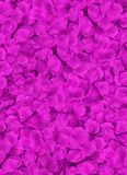 Lots of red petals laying on a floor Stock Photography