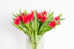 A lots of red tulip flowers.  stock image