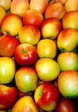 Lots of red yellow apples. In a crate royalty free stock photo