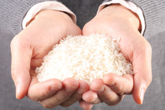 Lots of rice in the hand Stock Images
