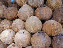 Lots of ripe coconuts at the market. In Mekong Delta, Vietnam Stock Image