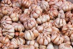 Lots Of Ripe Garlic Stock Images