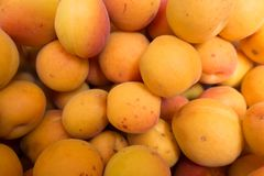 Lots of ripe orange apricots Royalty Free Stock Photo