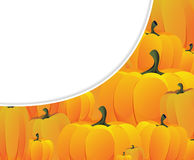Lots of ripe pumpkins Stock Photo
