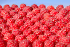 Lots of ripe raspberry, background Royalty Free Stock Images