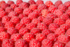 Lots of ripe raspberry, background Stock Photography
