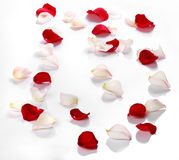 Lots of rose petals over white Stock Images
