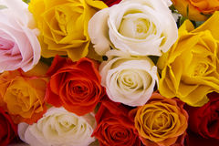 Lots of roses royalty free stock photography