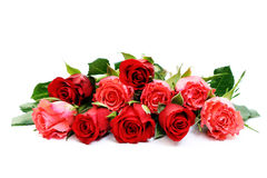Lots of roses Royalty Free Stock Photo