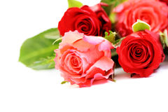 Lots of roses Royalty Free Stock Photos