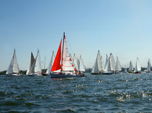 Lots of sailboats on a blue surface of water Stock Photography
