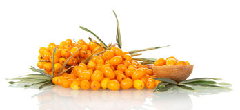 Lots sea-buckthorn with berries and  spoon isolated on white . Stock Photos