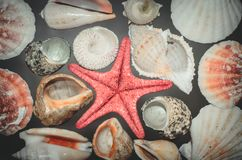 Lots of sea shells and a red starfish horizontal marine background top view stock photos