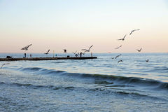 Lots of seagulls flying over the sea coast. Fishermen catch fish Stock Images