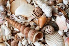 Lots of seashells. Stock Photos