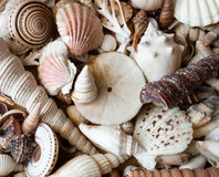 Lots of seashells. Royalty Free Stock Photos