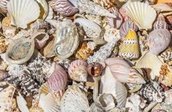 Lots of seashells. Full frame high angle shot showing lots of seashells Stock Photography