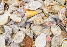 Lots of seashells. Full frame high angle shot showing lots of seashells Stock Photo