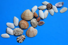 Lots of shells of different shapes Stock Photography