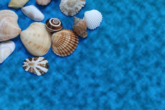 Lots of shells of different shapes Stock Photo