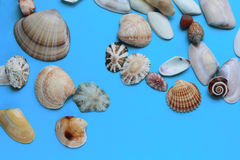 Lots of shells of different shapes Royalty Free Stock Photos