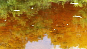 Lots of small fish swimming under the water in the. Clear water in the river where fish are moving. The bottom of the river is sandy yellow stock video footage
