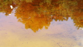 Lots of small fish swimming under the water in the stock footage