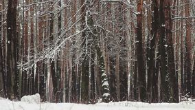 Lots of snow falling from trees in winter park (forest). Stock footage stock video footage