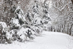 Lots of snow in forest Royalty Free Stock Image