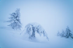 Lots of snow in the mountain forest Royalty Free Stock Photography
