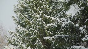 Lots of Snow on the Tree Branches. Snow on the Tree Branches in City Park stock video footage
