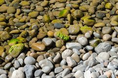 Lots of stones under water and two small crabs Royalty Free Stock Photo