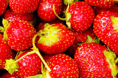 Lots of strawberries Stock Images
