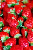Lots of strawberries Stock Image