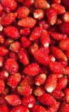Lots of strawberries arranged as  background Royalty Free Stock Photography