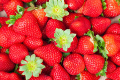 Lots of strawberries Royalty Free Stock Image
