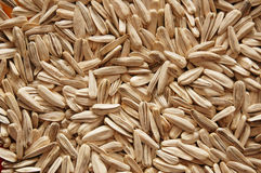Lots of sunflower seeds Royalty Free Stock Photos