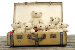 Lots of teddy bears in an old vintage suitcase Stock Photo