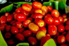 Lots of tomatoes Royalty Free Stock Image