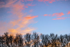 Lots of trees with red orange blue sky and clouds Royalty Free Stock Photography